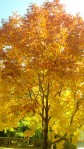 Fall_leaves1